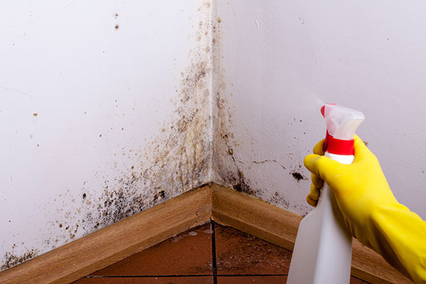 How to clean the mold on the walls or ceiling
